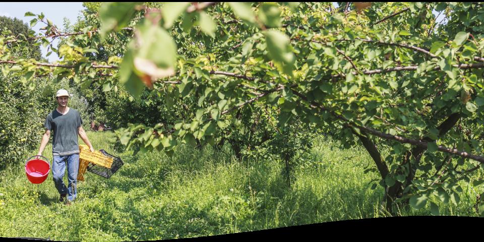 Origine des fruits secs - Jean Louis BASSINET