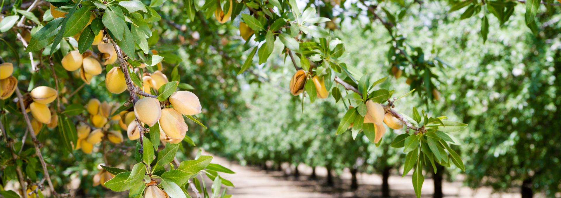 Fruits secs Jean-Louis BASSINET